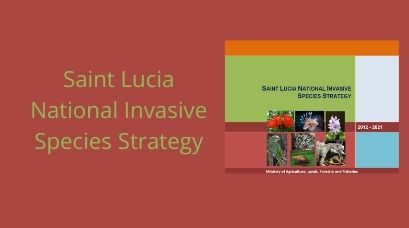/wp-content/uploads/2021/01/Saint-Lucia-National-Invasive-Species-Strategy.jpg